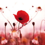 Red Flowers - DeinDesign